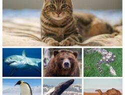 Hewan Menakjubkan, Mampu Tidak Makan dan Minum Selama 2 Minggu Sampai 6 Bulan